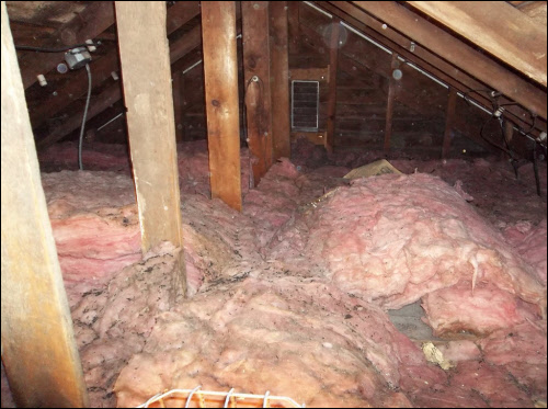 Is There Mold Growing On Your Attic Insulation